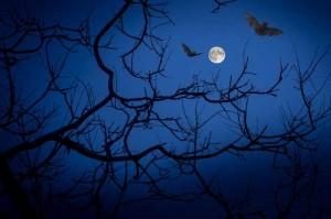 Isola Boschina, Pipistrello è Bello