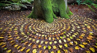 Mandala nel Bosco (C) James Brunt Artist
